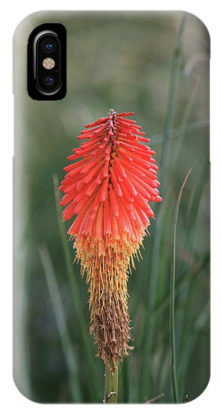 Firecracker IPhone Case