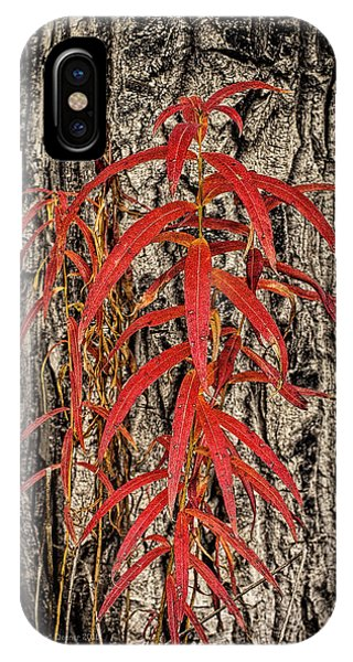 Fireweed 2015 IPhone Case