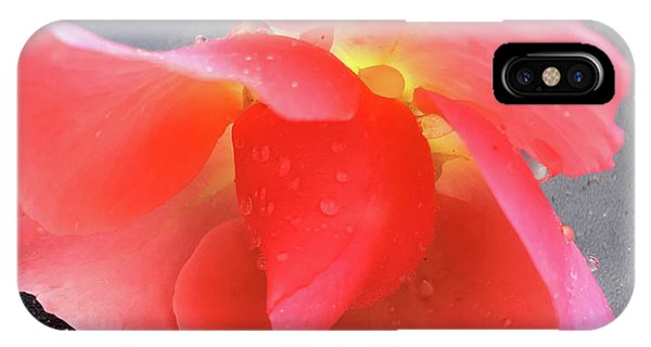 First Rose  IPhone Case