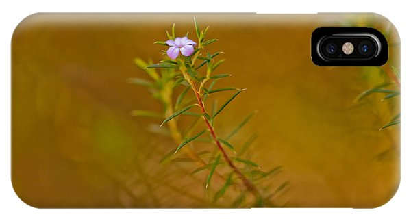 Fossil iPhone Case - First To Flower by Az Jackson