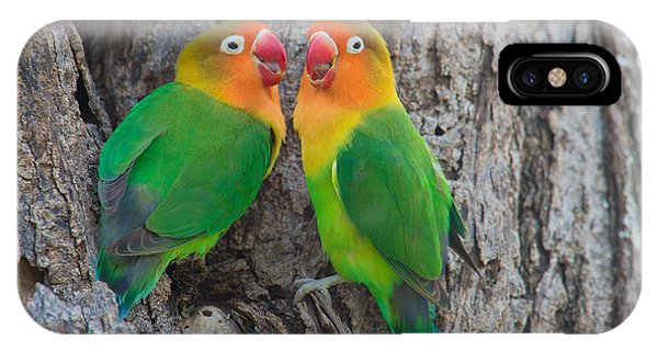 Lovebird iPhone Case - Fischers Lovebird Agapornis Fischeri by Panoramic Images