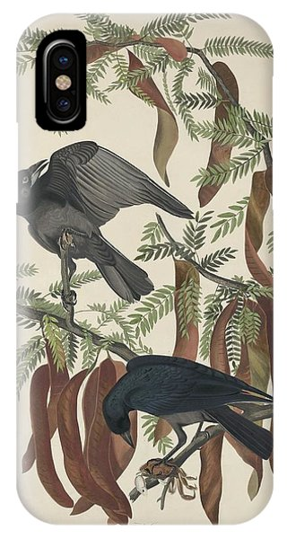 Raven iPhone Case - Fish Crow by Dreyer Wildlife Print Collections