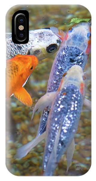 Fish Fighting For Food IPhone Case