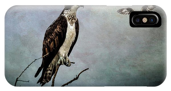 Avian iPhone Case - Fish Hawks by John Williams