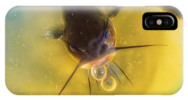 Catfish iPhone Case - Fish In A Barrell by Susan Capuano