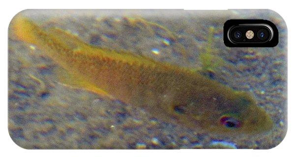 Fish Sandy Bottom IPhone Case