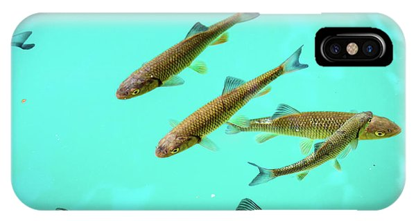 Fish School In Turquoise Lake - Plitvice Lakes National Park, Croatia IPhone Case