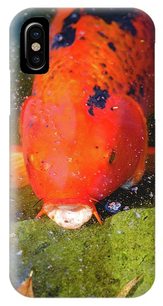 Fish Surprise IPhone Case