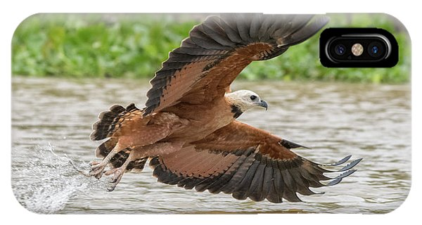 Fishing Hawk IPhone Case