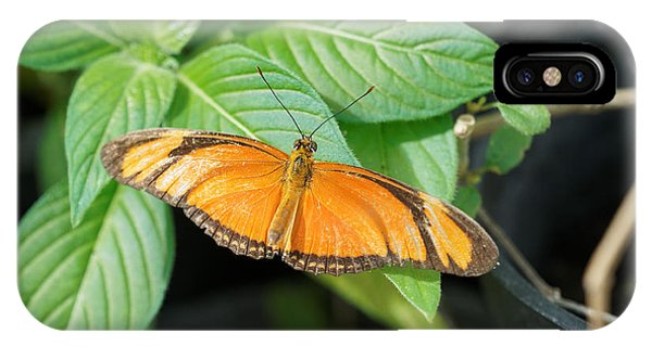 IPhone Case featuring the photograph Flambeau Butterfly by Paul Gulliver