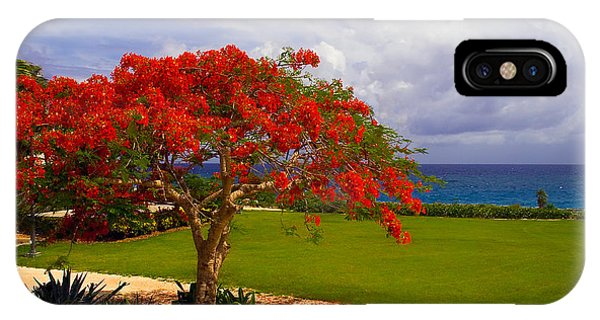 Flamboyant Tree In Grand Cayman IPhone Case