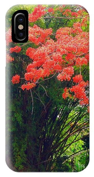 Flamboyant With Bamboo IPhone Case