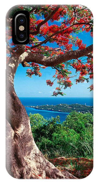 Flame Tree St Thomas IPhone Case
