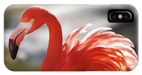 Flamingo 2 IPhone Case