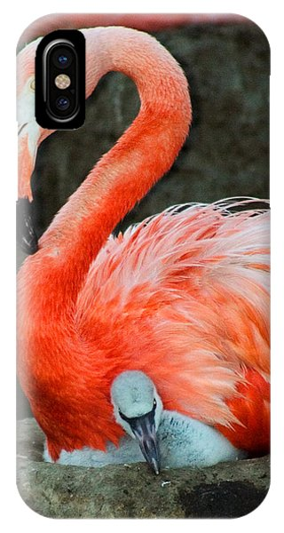 Flamingo And Baby IPhone Case