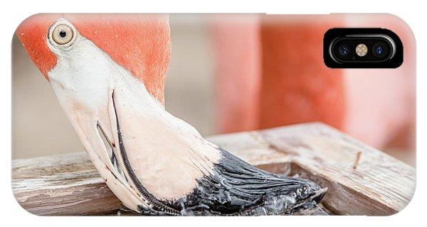 Flamingo At Sea World In Orlando Florida IPhone Case