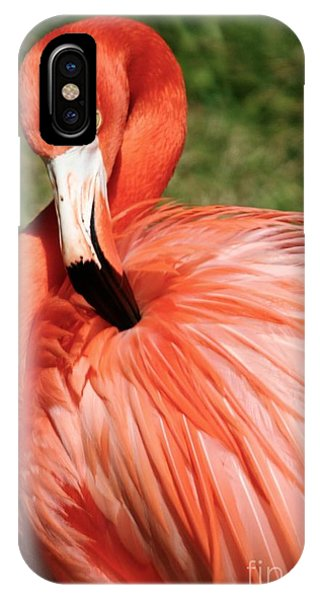 Flamingo At The Park 1 IPhone Case