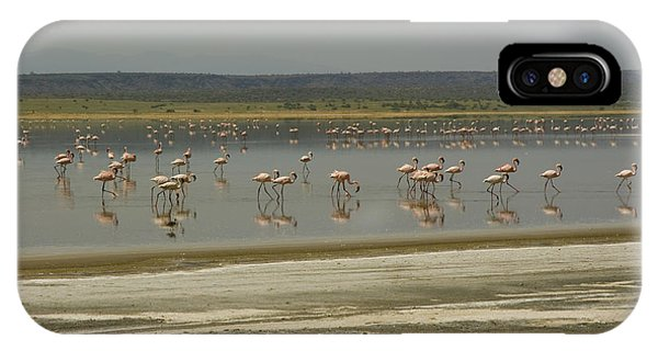 Flamingos Magadi Hot Springs Kenya IPhone Case