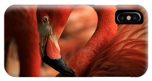 Flamingo Poised IPhone Case