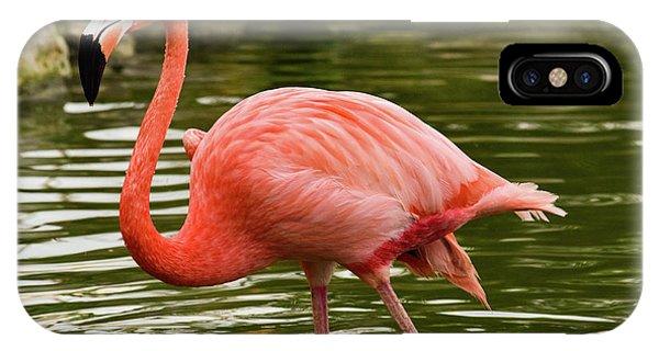Flamingo Wades IPhone Case