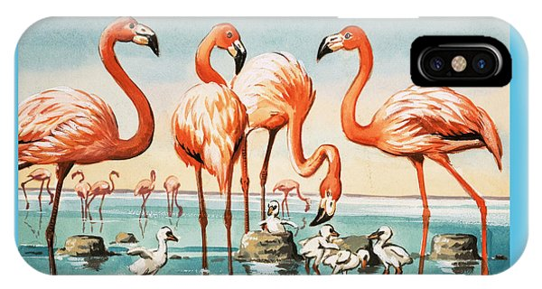 Flamingoes IPhone Case