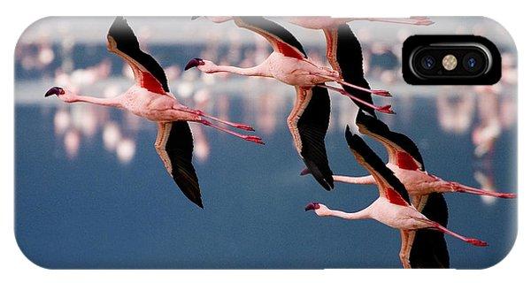 Flamingos In Flight-signed IPhone Case