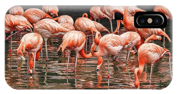 Flamingo Looking For Food IPhone Case