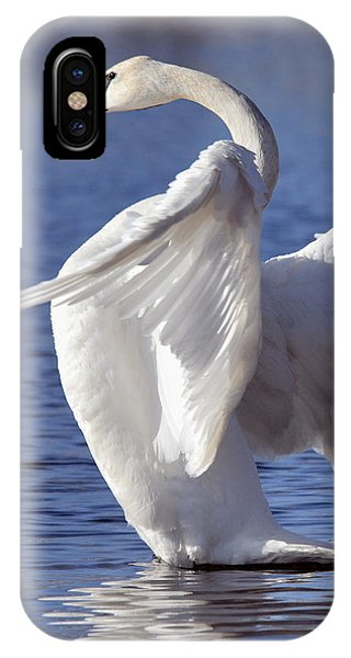 Flapping Swan IPhone Case