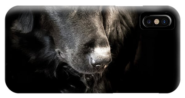 IPhone Case featuring the photograph Flat Coated Retriever by Allin Sorenson