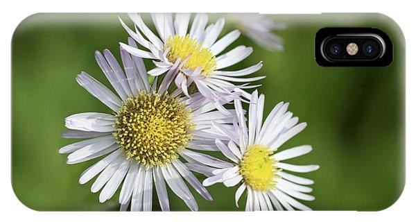 Fleabane, Erigeron Pulchellus - IPhone Case