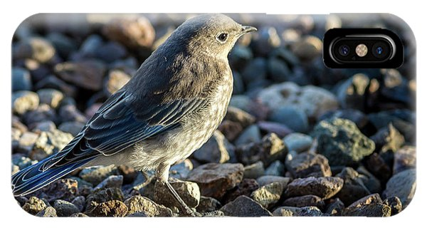 IPhone Case featuring the photograph Fledgling Mountain Bluebird by John Brink