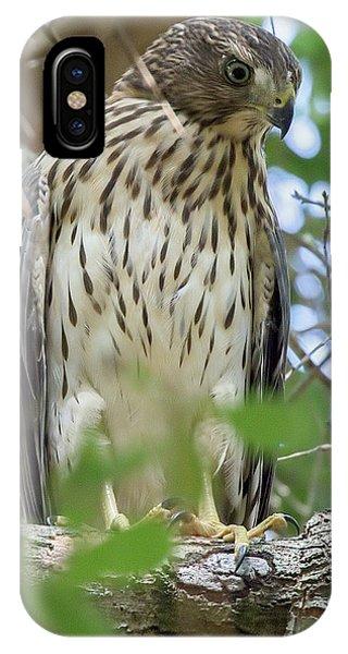 Fledgling Red-shouldered Hawk 2 IPhone Case