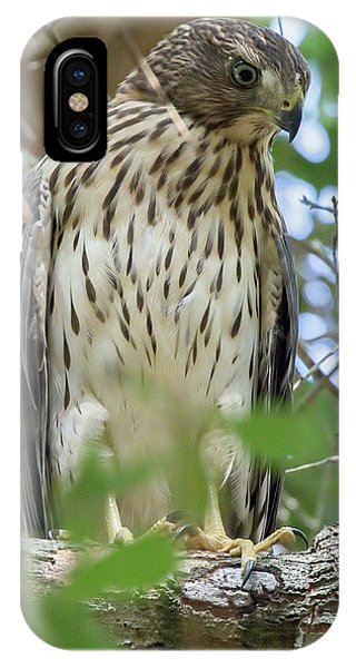 Fledgling Red-shouldered Hawk 2 IPhone Case