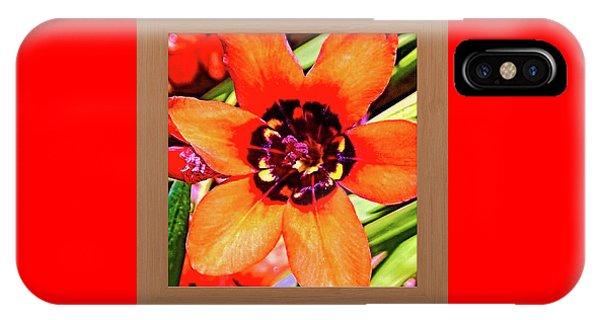 Oranger iPhone Case - Fleur D'oranger by Shirley Anderson