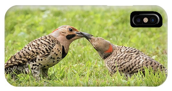 Northern Flicker iPhone Case - Flicker Feeding by Jurgen Lorenzen