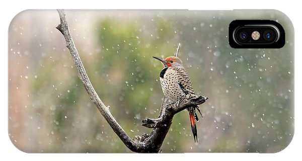 Northern Flicker iPhone Case - Flicker In The Rain by Donna Kennedy