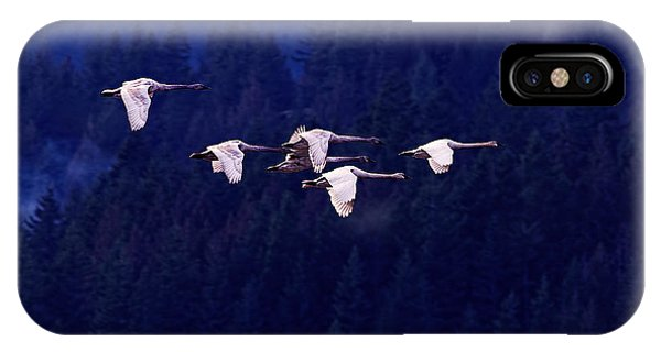 Swan iPhone Case - Flight Of The Swans by Sharon Talson