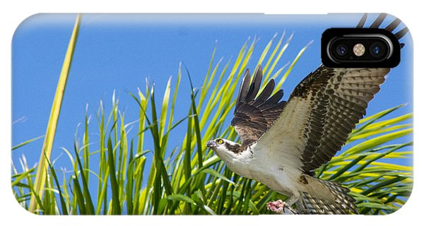 Ospreys iPhone Case - Flight Through The Palms by Quinn Sedam