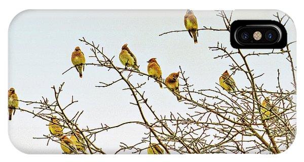 Cedar Waxing iPhone Case - Flock Of Cedar Waxwings  by Geraldine Scull