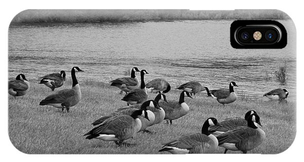Flock Of Geese IPhone Case