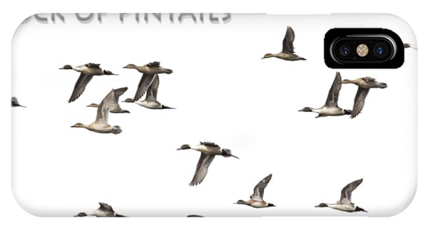 Flock Of Pintails IPhone Case
