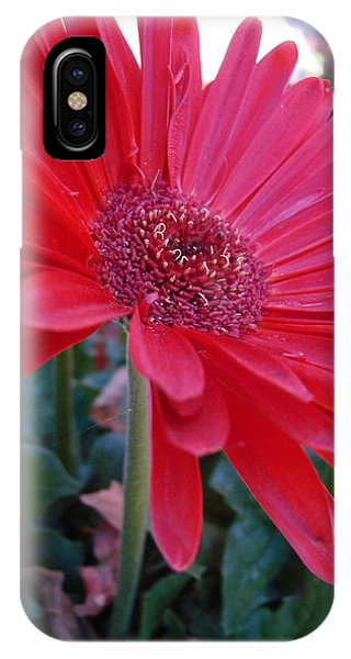 Flora IPhone Case