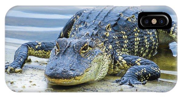 Florida Alligator Closeup IPhone Case