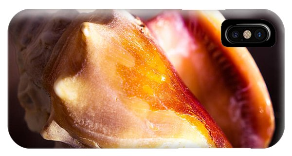 Florida Fighting Conch IPhone Case