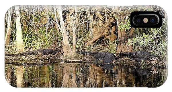 Florida Gators - Everglades Swamp IPhone Case