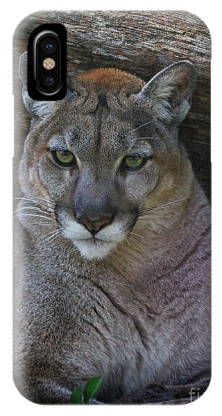 Florida Panther IPhone Case