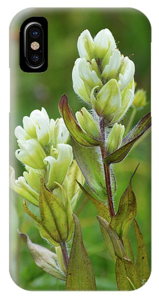 IPhone Case featuring the photograph Flower-2-11x14 by Kate Avery