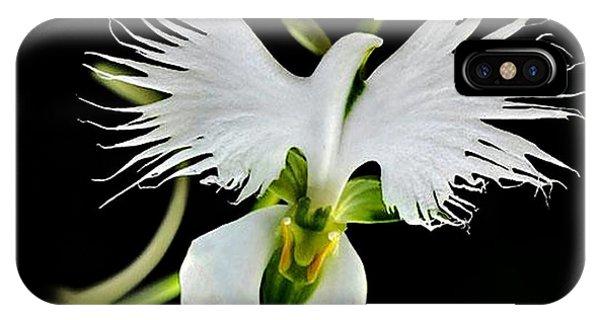 Flower Oddities - Flying White Bird Flower IPhone Case