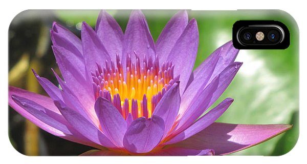 Flower Of The Lilly IPhone Case