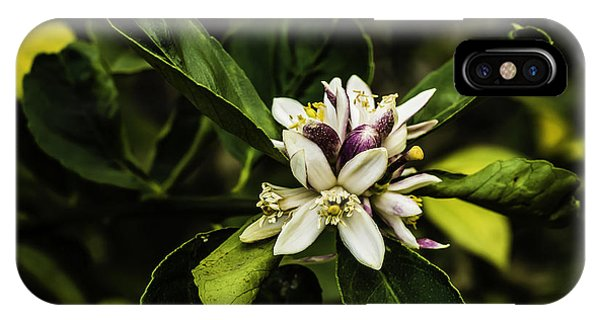 Flower Of The Lemon Tree IPhone Case